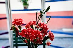 Tte  tte avec les fleurs (WhiteFlowersFade) Tags: voyage city travel flowers caf lines mxico america fleurs mexico dof citylife mexique ville dcoration flou cuernavaca lignes amrique vieenville