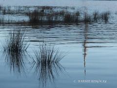 Reflections, Lake Burley Griffin, Canberra (BRDR images) Tags: reflections australia canberra australiancapitalterritory lakeburleygriffin