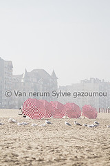 La Panne (gazoumou) Tags: belgique lapanne mer zee belgium gazoumou sylvievannerum europe city art photo l landscape paysage sea bird oiseau seagull belgischekust ctebelge noordzee merdunord beach plage travel voyage