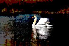 MAJESTIC (gazza294) Tags: flickr flicker flckr flkr garymargetts gazza294