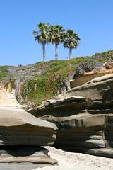 La Jolla Beach (designsbykari) Tags: ocean california usa beach rock waves sandiego unitedstatesofamerica lajolla pelican palmtrees seal tidalpool