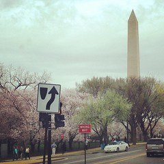 Cherry Blossoms (Karol A Olson) Tags: square dc washington cloudy squareformat rise washingtonmonument trafficsigns cherrytreeblossoms apr15 iphoneography instagramapp uploaded:by=instagram