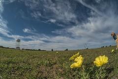 Buddy's Photobomb (FC) (jamesclinich) Tags: flowers sky dog detail clouds landscapes texas availablelight tx watertower clarity olympus fisheye handheld omd topaz adjust 75mm em10 samyang denoise photobomb littlefieldtx