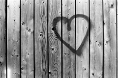 Knotty Love (Georgie_grrl) Tags: wood toronto ontario fence heart grain explore pentaxk1000 whome knotty blackandwhitefilm hehhehheh rikenon12828mm thefilmandthewoodtype