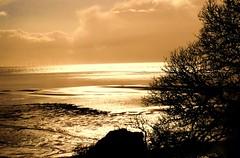 Shore (Tobymeg) Tags: sea sun tree beach golden scotland sand rocks tide dumfries galloway