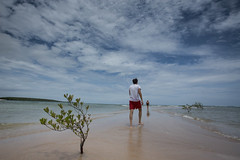 20160105 - Boipeba 242 (blogmulo) Tags: travel brazil beach brasil mangrove bahia salvador boipeba