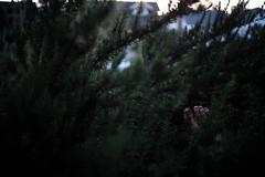 Pinned (thedarkerdark) Tags: california sunset nature losangeles toes rosemary margaretatwood ifyouleave justgoshoot 24hrchurch