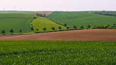 pturage (travelben) Tags: plant abstract france color green nature field grass de french landscape countryside europe cows outdoor country champs eu vert textures cote paysage campagne vaches herbage hardelot haut oliennes neufchatel pturage dopale