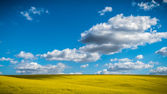 Yellow and blue (Jean-Luc Peluchon) Tags: blue light sky cloud sun france color beautiful field yellow rural jaune landscape soleil spring bright lumire postcard farming culture bleu ciel agriculture nuage paysage printemps couleur charente champ colza claatant