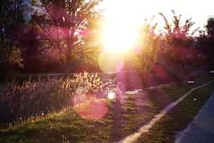s187 - wiato II / Light II (Suarrilk) Tags: light sun evening