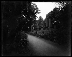 Tower Hamlets Cemetery Park 3 (Tea, two sugars) Tags: ilford ortho film blackandwhite orthochromatic orthochromaticcopyfilm 5x4 4x5 velopex radiographic chemical velopexradiographicchemical xray developer fixer harmantitanpinholecamera4x5 harmantitan harmantitanpinhole pinhole towerhamletscemeterypark towerhamlets cemeterypark tower hamlets cemetery park londonfilmphotographymeetup