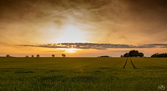 spring sunset (stein.anthony) Tags: nature landscape sonnenuntergang sundown natur landschaft