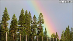 Rainbow Course(1) (NatePhotos) Tags: road sunset sea hawaii bay waterfall rainbow cows turtle maui hana jungle waterfalls kapalua rooster eel napili 2016 natephotos
