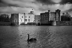 Lifestyles of the Rich & Famous (alex.illumidata) Tags: castle water monochrome architecture mono kent tudor moat leedscastle blackswan x100 landscapegarden