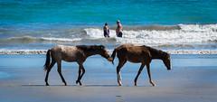 P1010816.jpg 1 1.7 (ChanHawkins) Tags: people beach costarica samara lumixfz1000 peopleatplayhorses