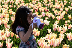 Tulip Festival (H Krom) Tags: flowers nature colors catchycolors nikon tulips mothernature tulipfestival naturephotography brightandbeautiful nikond750