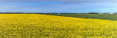 Minimal enough ? (Timo Halonen) Tags: summer field finland nokia kes n95 pelto laihia keltainen yewllow rypsi