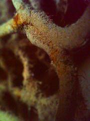 suciedad harinezumi (Pepe Alfonso) Tags: dirt hari schmutz salet suciedad harinezumi sporcizia harinezumifotografia harinemi2
