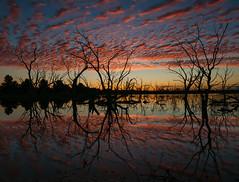 Campbell's Swamp (Jeff 05) Tags: nikon 28mm swamp campbells 1424 lakewyangan