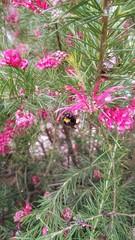 Yorkshire wildlife park (Sharon B Mott) Tags: nature bush bee foliage shrub yorkshirewildlifepark sonyxperiaz3
