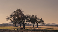 On the Plateau (Netsrak) Tags: trees sky tree field grass rural germany landscape deutschland outdoor plateau feld himmel gras rhine landschaft rhein bume baum acker boppard rheinlandpfalz lndlich rheingoldbogen
