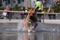 . (kthtrnr) Tags: nottingham dog waterfeature marketsquare