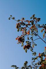 2015-09-29 10.22.26 1 (anastasiya_klenyaeva) Tags: sky nature yellow russia autmn     saratov vsco vscocam vscorussia vscosaratov