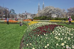 Tulipscapes of Ottawa (beyondhue) Tags: park ontario canada sussex spider gallery ottawa national tulip maman tulipfest 2016 beyondhue