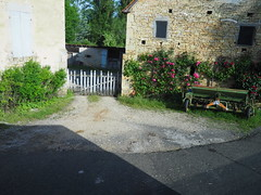 Farm Rose (#6) on road to Cahors (JP Newell) Tags: cahors midipyrnesregion roses french france flowers gardens