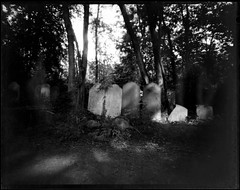 Tower Hamlets Cemetery Park (Tea, two sugars) Tags: ilford ortho film blackandwhite orthochromatic orthochromaticcopyfilm 5x4 4x5 velopex radiographic chemical velopexradiographicchemical xray developer fixer harmantitanpinholecamera4x5 harmantitan harmantitanpinhole pinhole towerhamletscemeterypark towerhamlets cemeterypark tower hamlets cemetery park londonfilmphotographymeetup