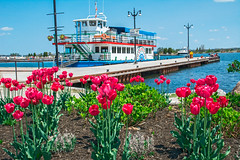 Island Princess (fotofrysk) Tags: blue ontario canada tulips lakeside orillia cruiseboat islandprincess lakecouchiching mississagastreet nikond7100 0522164956