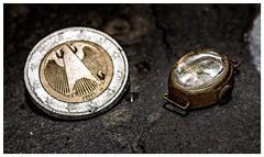 Smaller than a coin (Barb120459) Tags: macromondays smallerthanacoin