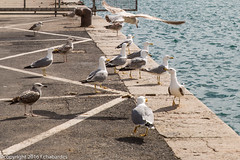 160403_lan_her_set_2923.jpg (f.chabardes) Tags: france languedoc ste vieuxport hrault avril 2016 2t