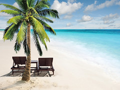 173140940 (tigercop2k3) Tags: activity armchair beach blue caribbean chair climate coconut comfortable destinations edge horizontal island leisure lifestyles locations lounge outdoor outdoors palm pursuit recreational relaxation sand scene sea sitting sky summer sun togetherness tranquil travel tree tropical turquoise unity vacations water waters