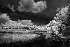 Fowl River (Howell Weathers) Tags: trees blackandwhite nature water monochrome clouds ir outdoor alabama infrared bellingrathgardens fowlriver