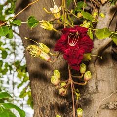 Bloom (Oliver Leveritt) Tags: nikond610 afsnikkor2470mmf28ged oliverleverittphotography sb800 flash speedlight flower