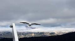 Gaviota (Juuliett) Tags: lake argentina lago heaven south paisaje lagos glaciar lanscape bariloche paraso patagoniaargentina sancarlosdebariloche surargentino paisajeglaciar
