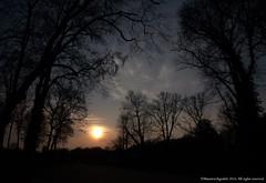 Park  Sanssouci. Sunset (Ivan Mauricio Agudelo Velasquez) Tags: park parque sunset sun tree sol forest germany arbol atardecer bosque alemania potsdam