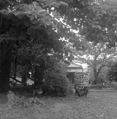 Rooster in the temple garden (odeleapple) Tags: bw mamiya film garden temple rooster 65mm c330 mamiyasekor neopan100acros
