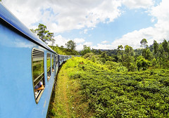 SriLanka-2016-0050 (Mariss Balodis) Tags: srilanka tropics travel vacation teaplantation tea paradise adventure summer ocean culture surfing surfer water explore srilankan beach sand sunset sunrise mountains landscape town city local wallpaper nature ella exotic train blue green sky