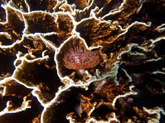 Coral Garden snorkeling (Scott Weatherson) Tags: ocean sea nature water sport coral swimming island asia underwater snorkel philippines resort snorkeling cebu snorkelling filipino reef saltwater badian coralgarden