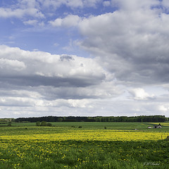 Yellow spring ! (jm.buchet (VisionNatureJMB)) Tags: yellow jaune spring printemps ardenne