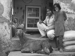 india (gerben more) Tags: girls people woman india girl animal blackwhite goat bracelet rajasthan shekawati