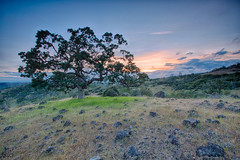 Lone oak in the Ishi Wilderness (Kevin English Photography) Tags: california pink blue trees sunset sky green nature beauty rock clouds landscape lava oak quercus solitude alone wind hiking wildlife scenic rocky backpacking remote wilderness volcanic grasslands rugged ishi igneous