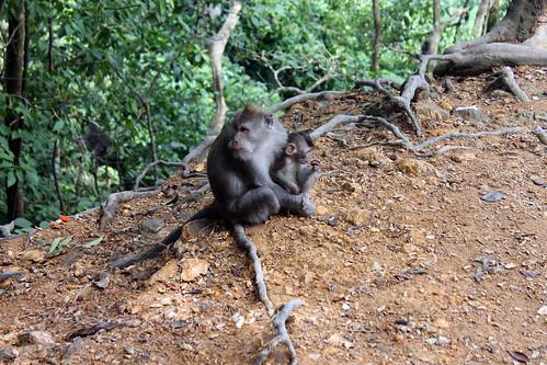20150224_110332 Pusuk Monkey Forest, Lombok