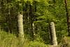 Galgen Aarburg ( Ruinen - Richtstätte - 1704 letzmals erneuert - 1798 zerstört - 20 Jh. wiederhergestellt - forca gibet gallows Richtstätte Richtplatz lieu d'exécution luogo di esecuzione place of execution ) im Wald bei Aarburg im Kanton Aargau der Schwe (chrchr_75) Tags: chriguhurnibluemailch christoph hurni schweiz suisse switzerland svizzera suissa swiss chrchr chrchr75 chrigu chriguhurni april 2015 albumzzz201504april galgen forca gibet gallows richtstätte richtplatz lieu dexécution luogo di esecuzione place execution
