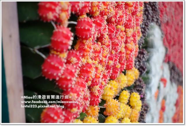 고양국제꽃박람회010