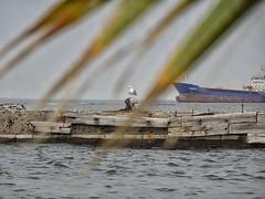 İzmir (denizsan1) Tags: sea seagull deniz palmiye izmir martı konakpiyer