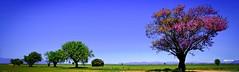 Par ordre croissant......... (Malain17) Tags: sky france nature colors composition landscape photography europa image pentax perspective photographers panoramic bleu arbres contraste provence capture vue montagnes