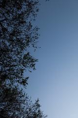 Invading the skies (K.rar) Tags: blue shadow brazil sky black tree dark leaf noir branch skies bresil saopaulo branches ombre bleu ciel sombre half gradient paulo sao chiaroscuro arbre clair feuille obscur branche dgrad moiti cieux feuillage